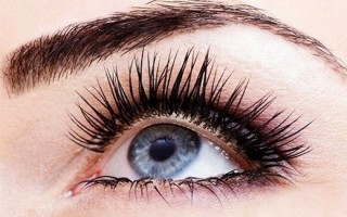 Какие функции выполняют ресницы и брови: строение и характеристика волосков